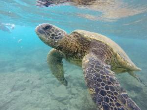 Hawaii dag 7, Maui.